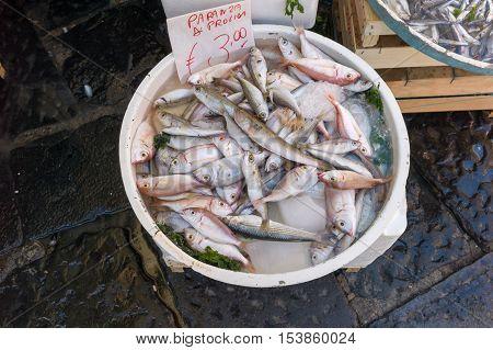 Dish Of Paranza