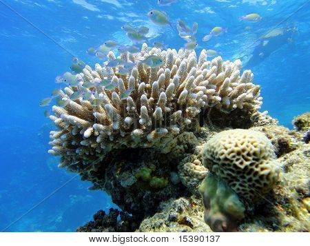 Funny Fishes On Coral