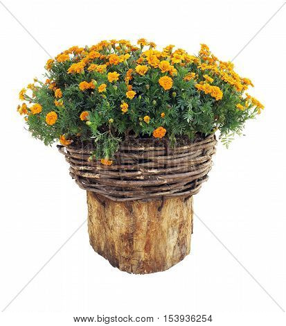 Bright flowers in wicked basket on cut log isolated over white background