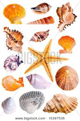 14 Muscheln und Sterne-Fish, Studio isolated on White.