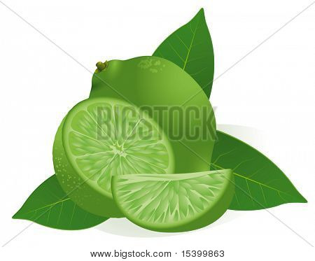 Lime. Vector.