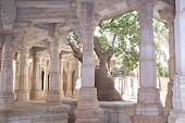 Column Of Marble Of A Jain Temple With A Big Tree, Ranakpur, India