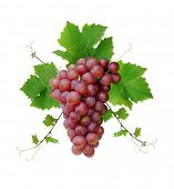 stock photo of wine grapes  - Ornamental motif of pink wine grape - JPG
