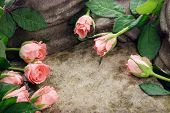 image of obituary  - Pink roses composition on stones with waterdrops - JPG