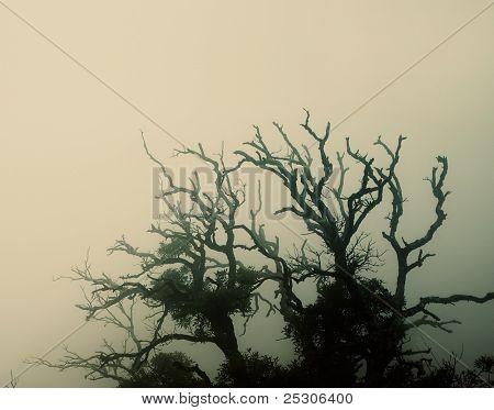 Old spooky tree