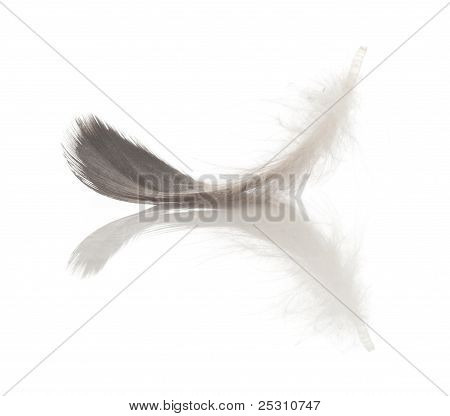 single feather