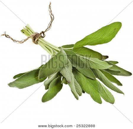 sage bunch  isolated on white