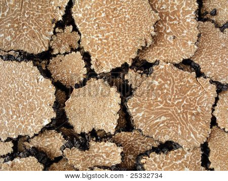 Truffle's Texture