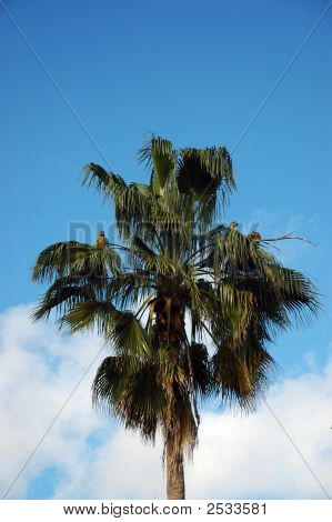Three Wild Parrots Perched On Palm Tree