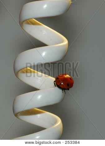 Ladybug On A Telephone Wire
