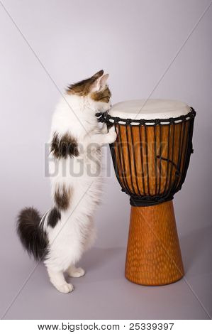Cat with a drum