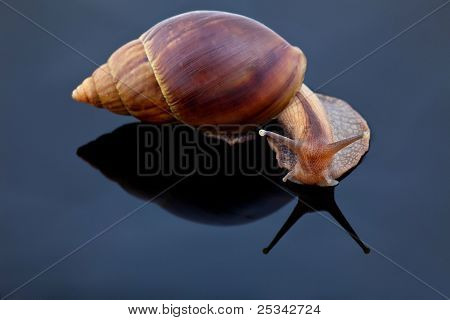 snail look at mirror on black background