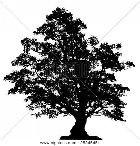 Vectorized oak tree