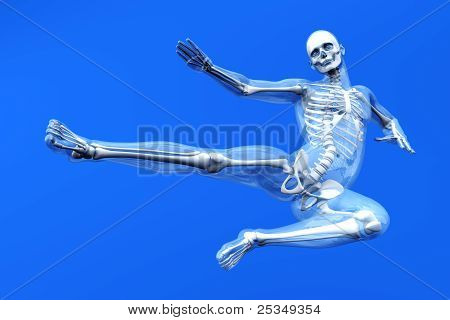 Anatomy -  Martial Arts.