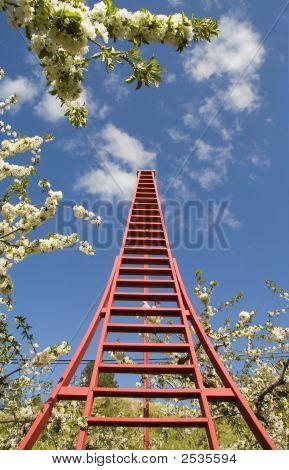 World'S Tallest Orchard Ladder