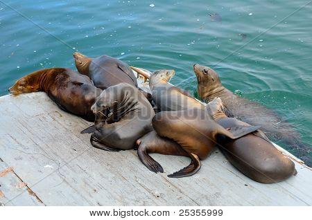 Sea Lions On Platform
