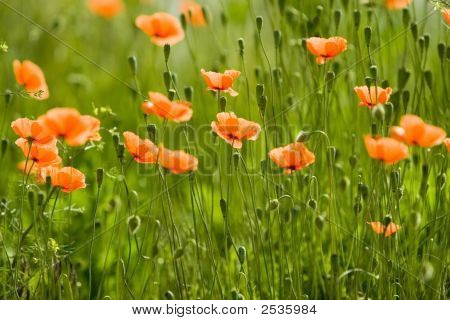 Orange Flower Forest