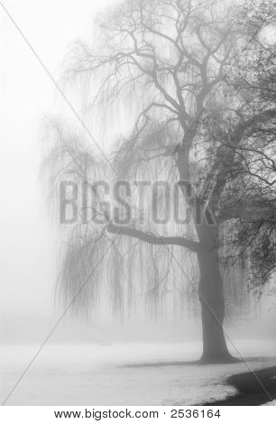 Knarly Tree In Winter Fog