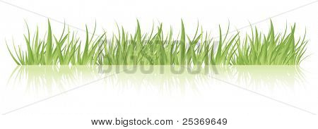 Vector green grass, isolated.