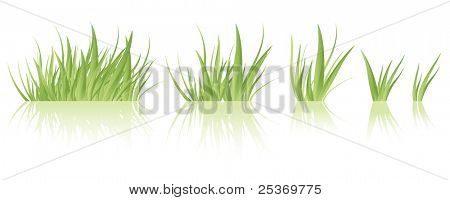 Vector green grass tufts, different sizes, isolated.