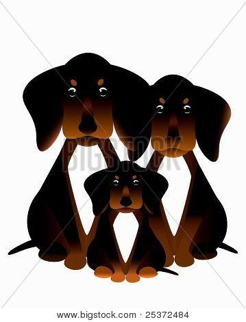 Dachshund family