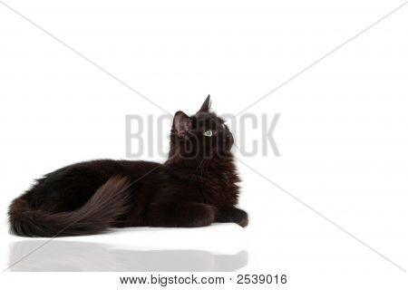 Black Cat With Reflect