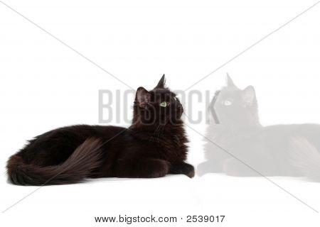 Black Cat With Reflect 2