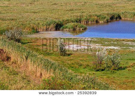 Reed Gürtel Landschaft im Nationalpark