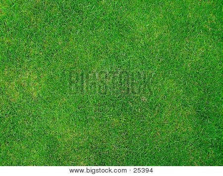 Wimbledon Geass