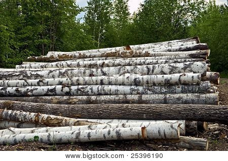 Timber Pile Background  Of Forest
