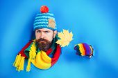 Serious Bearded Man With Autumnal Maple Yellow Leaf In Hand. Hipster With Beard In Colorful Hat Look poster
