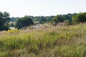 Meadow By The River, Meadow Grass, Trees And Blue Sky poster