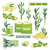 Sugar Plant Agricultural Crops, Cane Leaf, Sugarcane Juice Vector Icons. Sugar Cane, Sweet Plant, Na poster