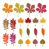 Autumn Leaves Yellow Foliage Vector Set. Season Of Orange Leaves, Illustration Collection Of October poster