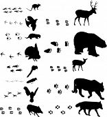 stock photo of bear tracks  - illustration with different animals and tracks collection - JPG