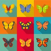 Types Of Butterflies Icons Set. Flat Set Of 9 Types Of Butterflies Icons For Web Isolated On White B poster