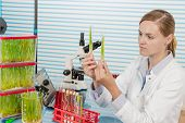 scientist with green plant in modern laboratory. woman study of genetic modified GMO plants in the l poster