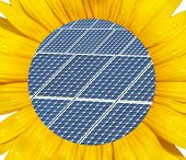 foto of heliotrope  - Sunflower macro with photovoltaic panel in the middel - JPG