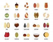 Nut Types Ith Signed Names Icons Set. Flat Illustration Of 20 Nut Types Ith Signed Names Icons For W poster