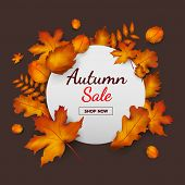 Sale Banner Promotion Autumn Season On Dark Background With Falling Leaves And Text. Autumn Season A poster