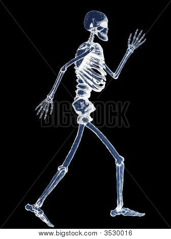 X-Ray Of Full Human Skeleton Illustration On Black Background