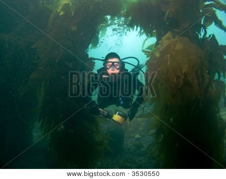 Diver Swims Through Kelp Towards The Camera