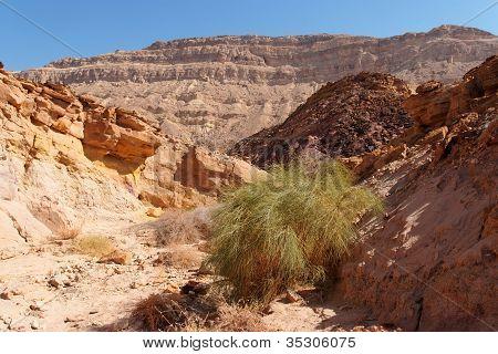Scenic desert canyon