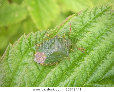 Defenders of light-green