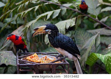Aves exóticas en un comedero en el Parque de las aves a Bali