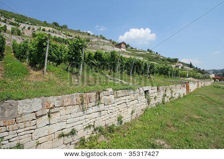 Winegrowing Region Saale-Unstrut, Germany