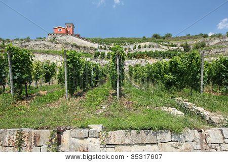 Vineyards on the Unstrut river, Germany