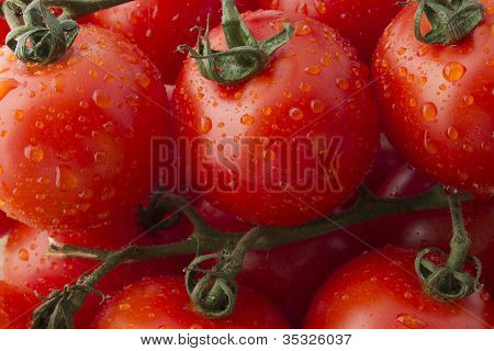 Fresh Ripe Tomatoes on the Vine