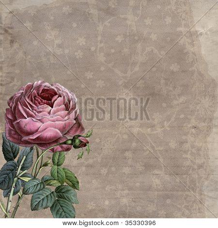 Old Roses and Lace