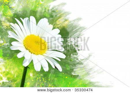 Chamomile Flower.watercolor Effect